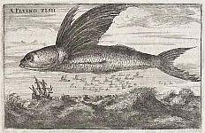 Stik: Flyvefisk