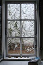 træer md rimfrost